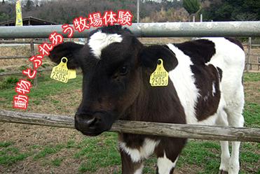 動物とふれあう牧場体験